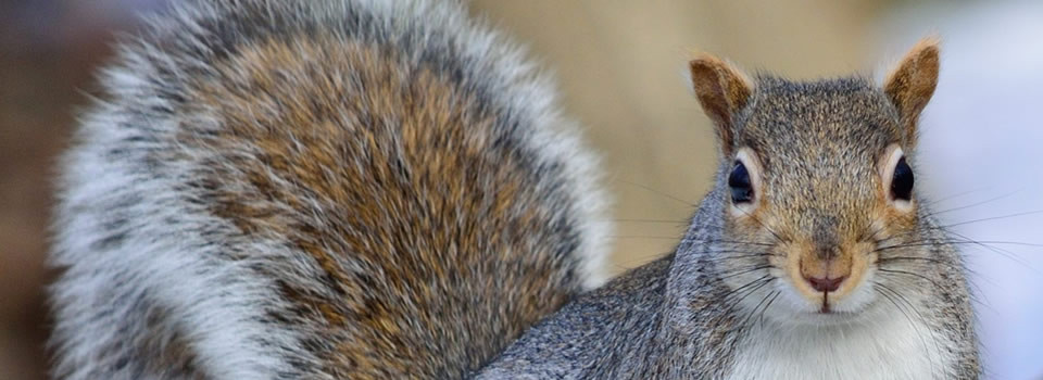 Wildlife Removal Pearland